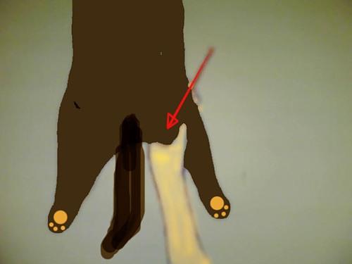 Видео как сделать укол кошки