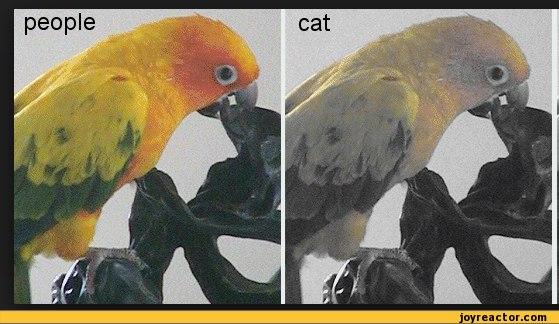 Как цветом видят коты