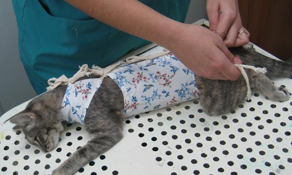 Как сделать стерилизацию кошки