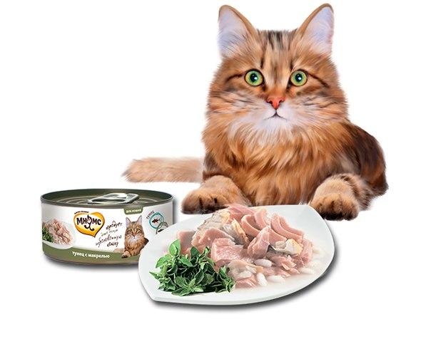 Выбираем кошачьи консервы