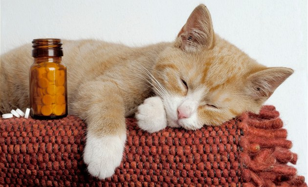 http://style-jasmine.ru/images/information/cat2lecarstvo.jpg