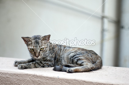 depositphotos 7197412 Cat on the wall